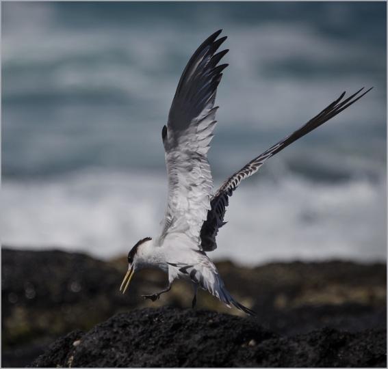 Tern Rock Landing