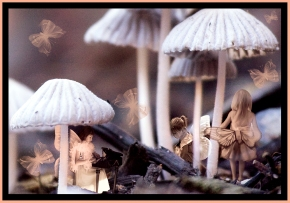 Under the Toadstools